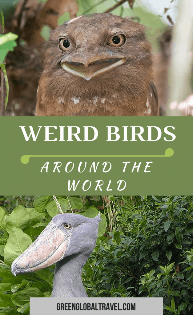 The world is a wild and wonderful place, filled with millions of remarkable species most of us have never even heard of. From amphibians and reptiles to birds, mammals, and sea animals, some of our favorite wildlife species are beautifully bizarre. If you're attracted to unusual oddities, you'll love our epic guide to 60 weird animals around the world that we believe make this planet a more interesting place. ​via​ ​@greenglobaltrvl