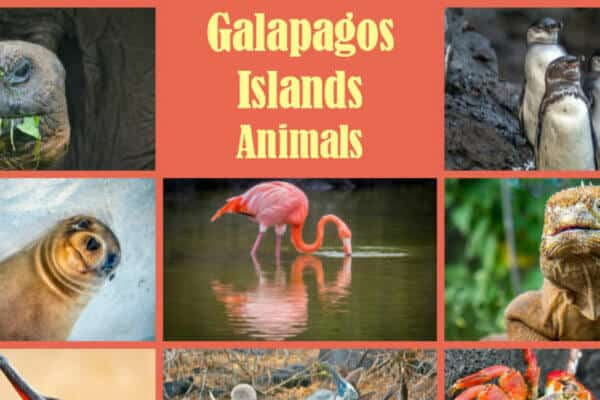 Galapagos Islands Animals includes Galapagos Tortoise, Galapagos Penguin, Galapagos Shark and more