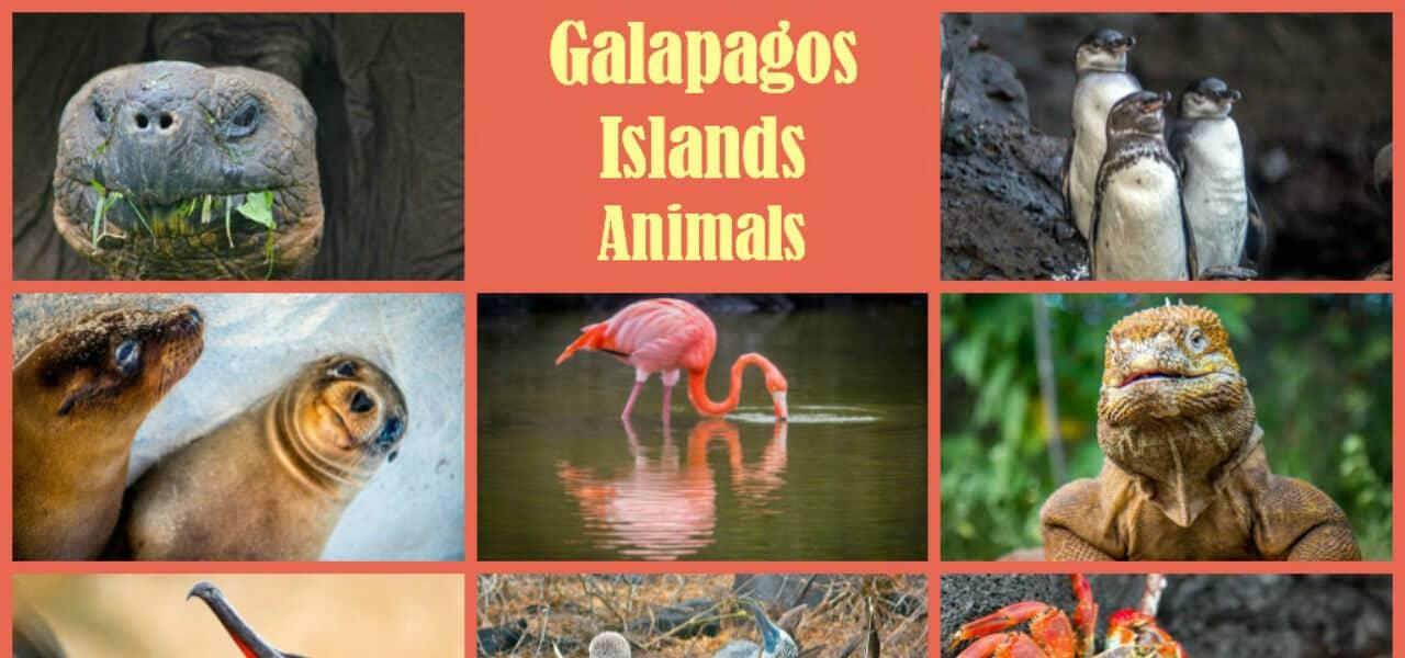 Galapagos Islands Animals includes Galapagos Tortoise, Galapagos Penguin, Galapagos Shark and more