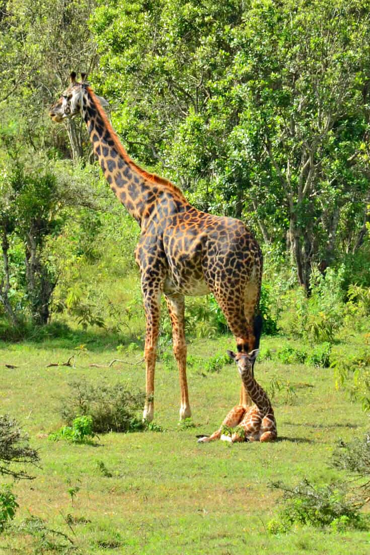 The Top 10 Tanzania National Parks & Reserves. Our Tanzania safari guide includes Kilimanjaro, Serengeti, Tarangire & numerous lesser known gems.   Tanzania Travel   Tanzania Wildlife   Tanzania Africa via @greenglobaltrvl