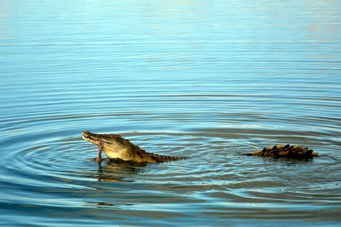 Ruaha National Park Tanzania -Crocodile by pixabay