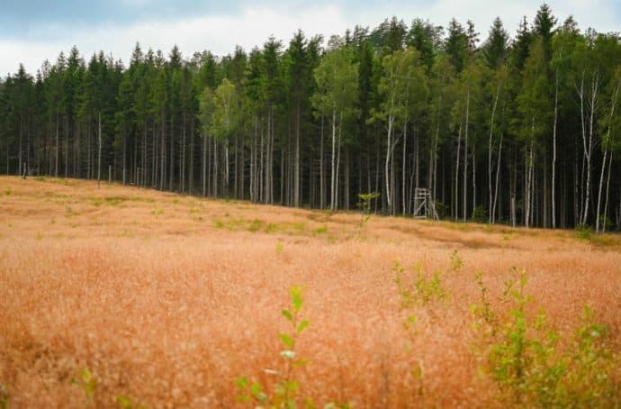 Forests of Sweden