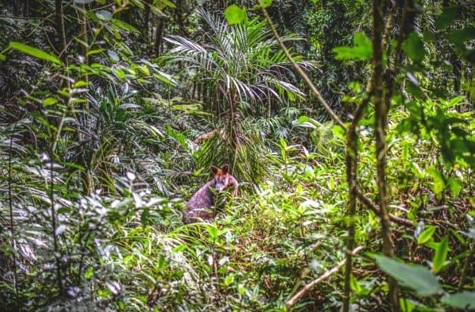 Gondwana Rainforest