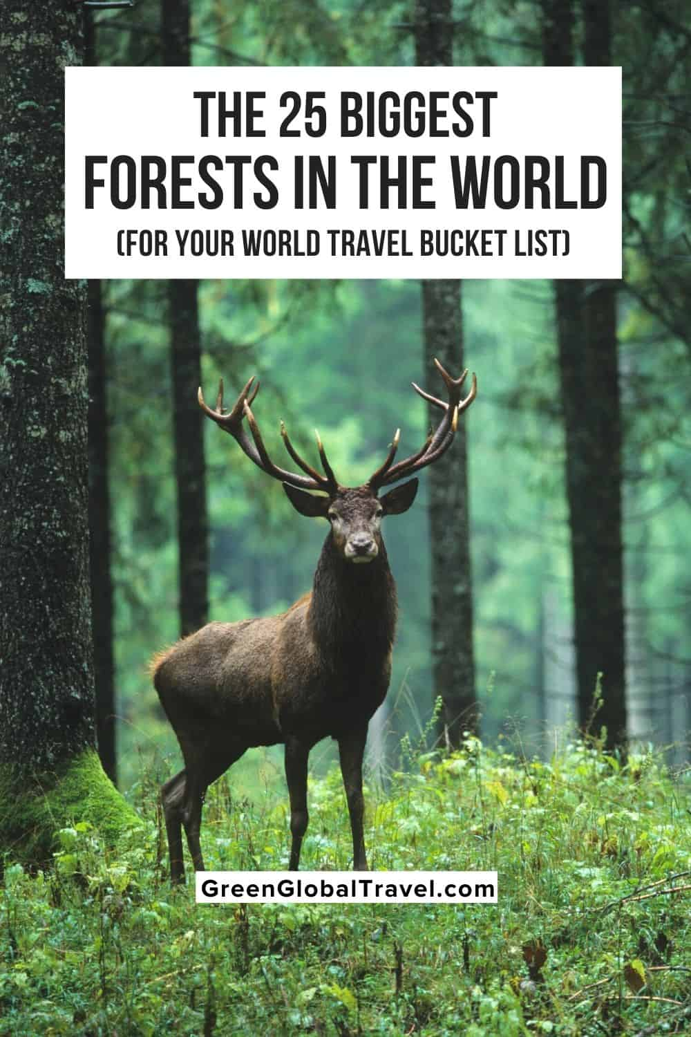 The 25 Biggest Forests (For Your World Travel Bucket List) including Forests in America, African Forests, Asian Forests, European Forests and more!