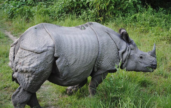 Mammals in India -One horned Rhino