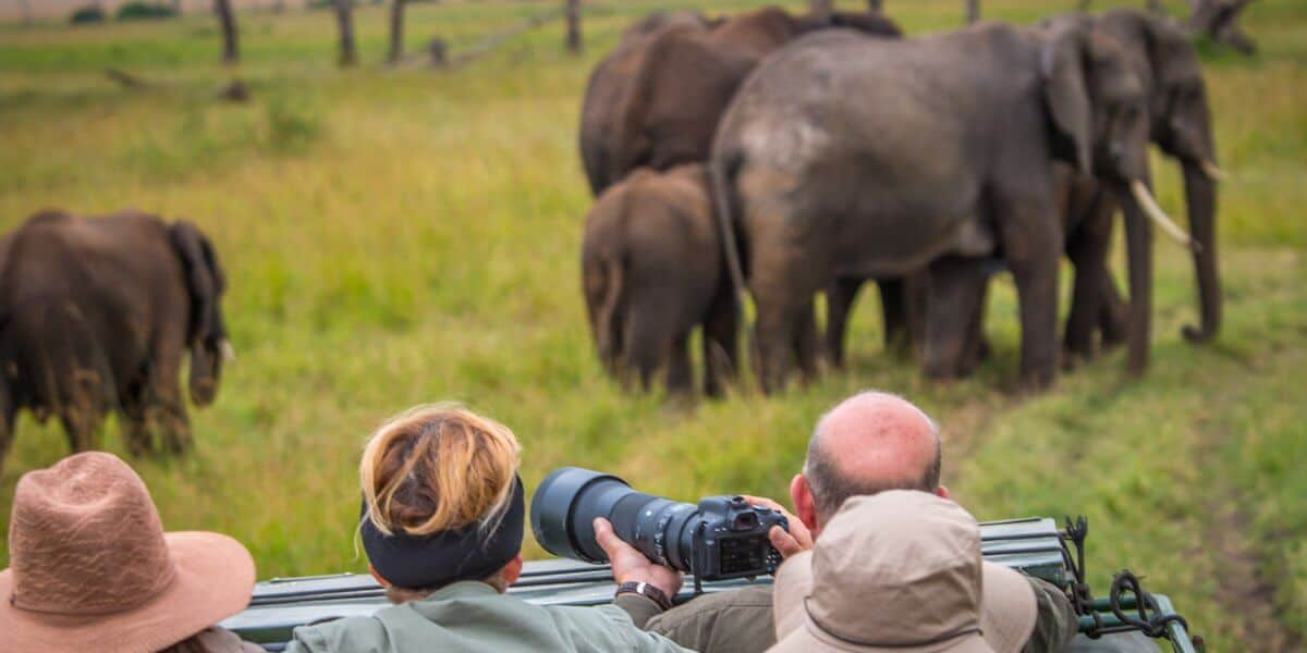 Animals in Kenya: African Elephants in the Maasai Mara