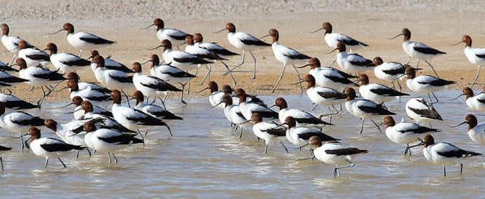 Largest Lake in Australia - Lake Eyre