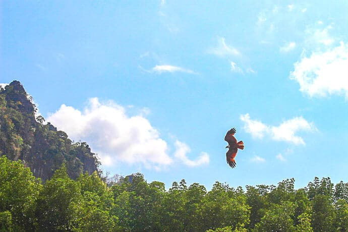 Kilim Karst Geoforest Park Langkawi Malaysia -Langkawi Eagle