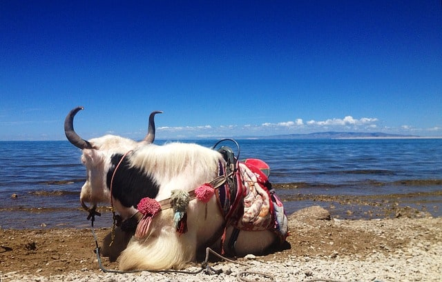 China's largest saltwater lake - Qinghai Lake