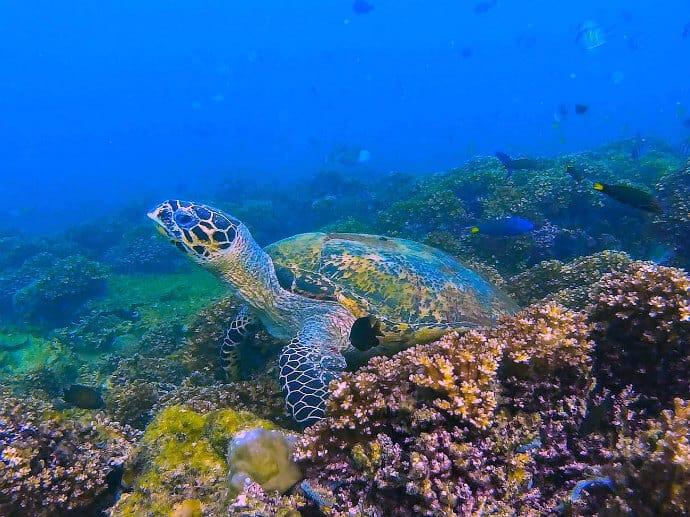 Snorkeling in Borneo, Malaysia -Kota Kinabalu