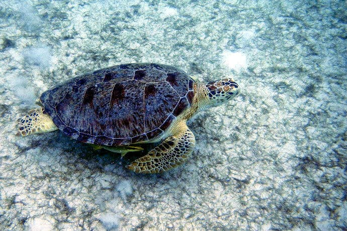 Things to do on the Malaysian Islands-Snorkel with Turtles on Perhentian Islands