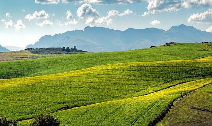 Plant Biotechnology- Canola Farm