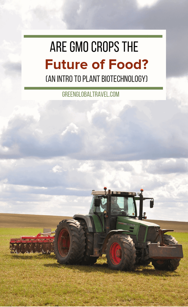 Are GMO Crops the Future of Food? (Introduction to Plant Biotechnology). An insightful interview with Dr. Paul S. Teng, Board Chairman of the ISAAA. via @GreenGlobalTrvl #GMOs #Monsanto #Food #Agriculture #Gardening #Farming #GeneticallyModified #Biotech #Biotechnology
