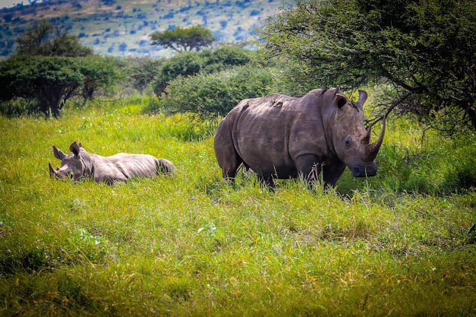 Rhino Baby and Mother in Meru National Park