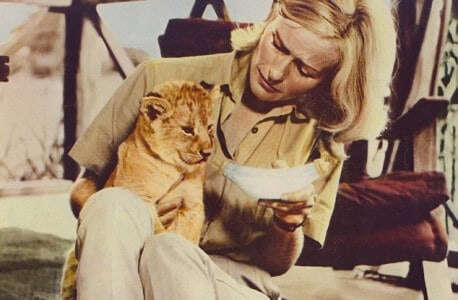 Virginia Mckenna with Elsa in the movie Born Free
