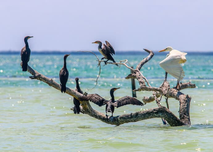Birds in the Yum Balam Reserve of Isla Holbox, Mexico