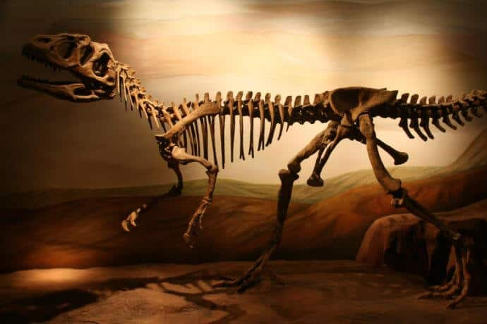Patagonia Argentina Tourist Attractions -Paleontology Museum Trelew