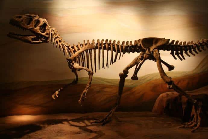 Patagonia Argentina Tourist Attractions -Paleontology Museum Trelew