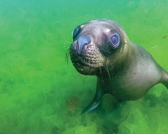 Patagonia Wildlife - Sea Lion Punta Loma by Wandering Wagars