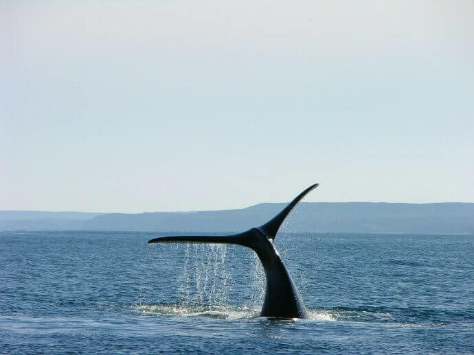 Things to do in Patagonia Argentina - Whale Watching