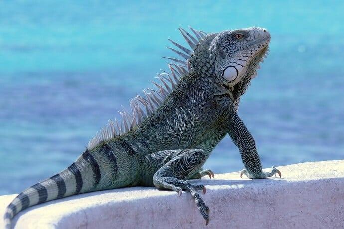 Bonaire Island - Best Caribbean Islands