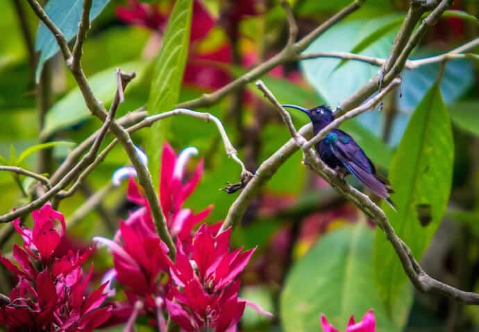 Things to Do in Antigua Guatemala: Birdwatching at Finca el Pilar