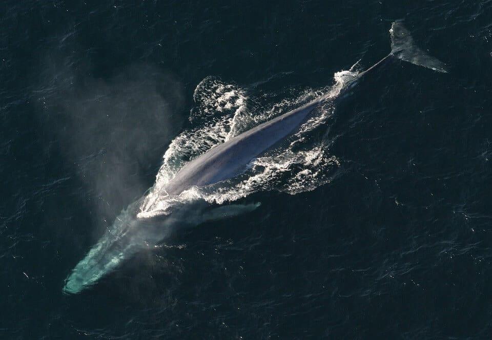 Blue Whale Habitat