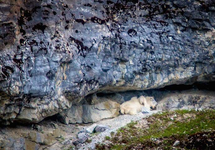 Mama & Baby Mountain Goats in Glacier Bay National Park