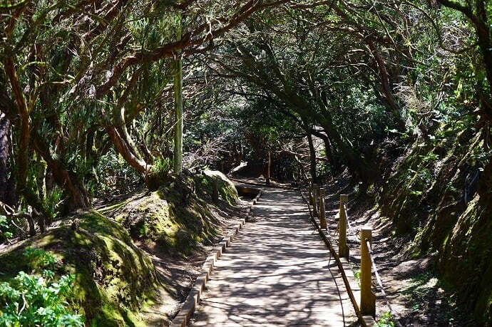 Bosque de Esperanza Tenerife Canary Islands