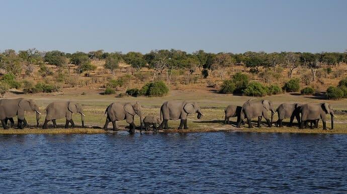 Africa Cruises -Chobe River (Botswana)