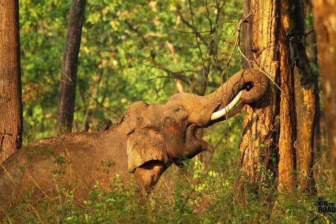 Best Places to visit in India for Nature Lovers - Nagarhole National Park