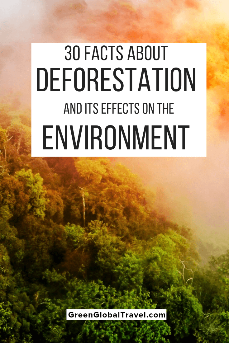 30 Facts About Deforestation & Its Effects On the Environment. Includes the causes of deforestation, examples of deforestation around the world, & deforest solutions. What is Deforestation | Causes of Deforestation | Environmental Effects of Deforestation | Examples of Deforestation | disadvantages of deforestation | deforestation and climate change | causes and effects of deforestation | how can we stop deforestation | Consequence of Deforestation | deforestation effects on animals