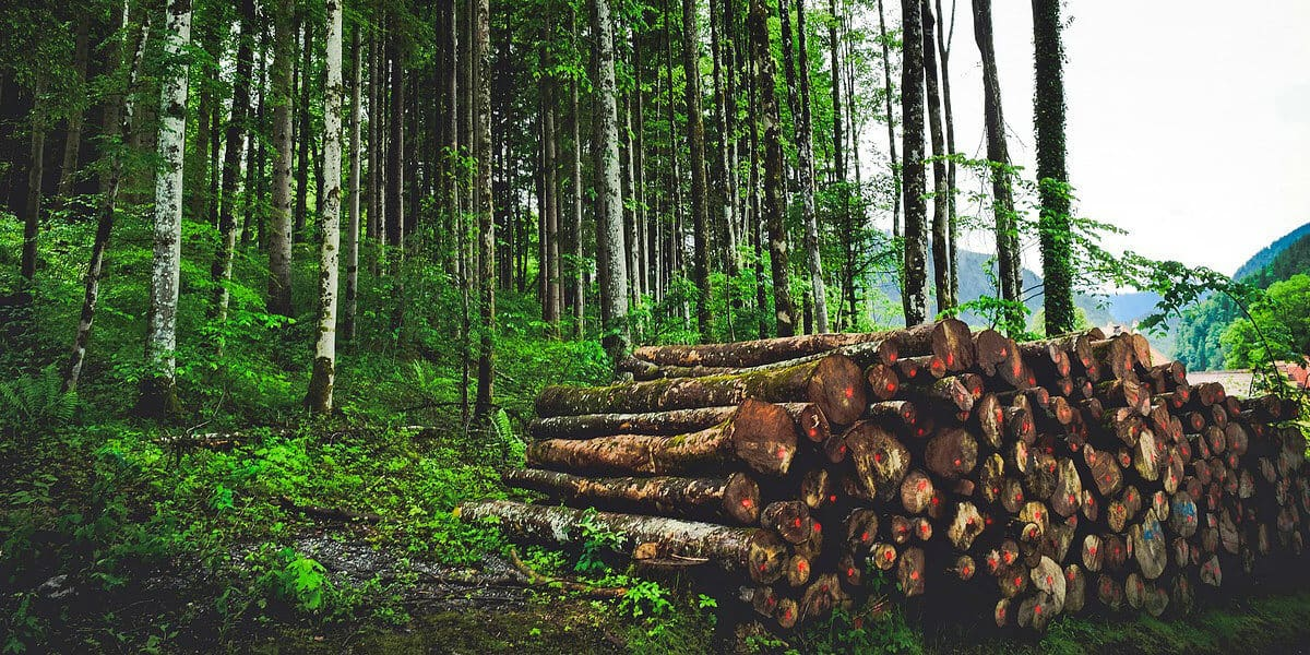 Facts about Deforestation and Environment