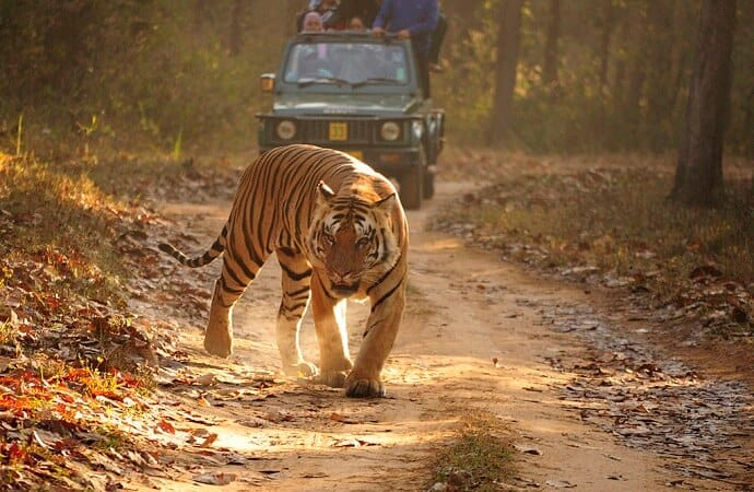 Famous tourist places in India - Kanha Tiger Reserve
