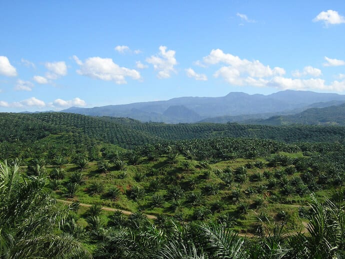 30 Facts Deforestation - Oil Palm Plantation