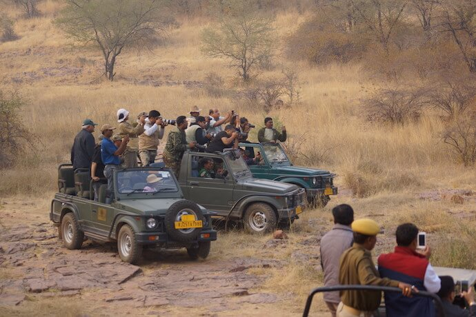 Tourist places in India - Ranthambore safari