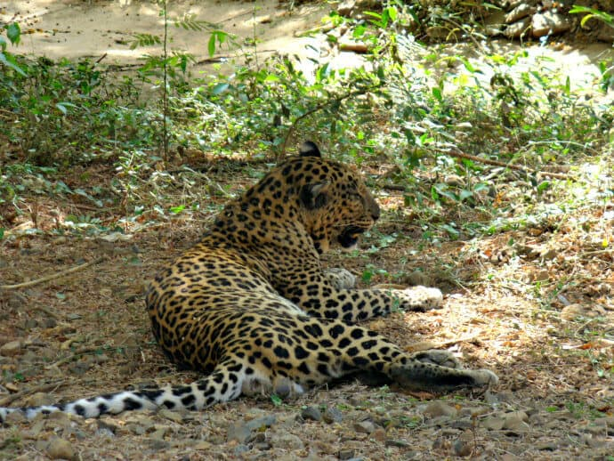 Top places to visit in india to see wildlife - Sanjay Gandhi National Park