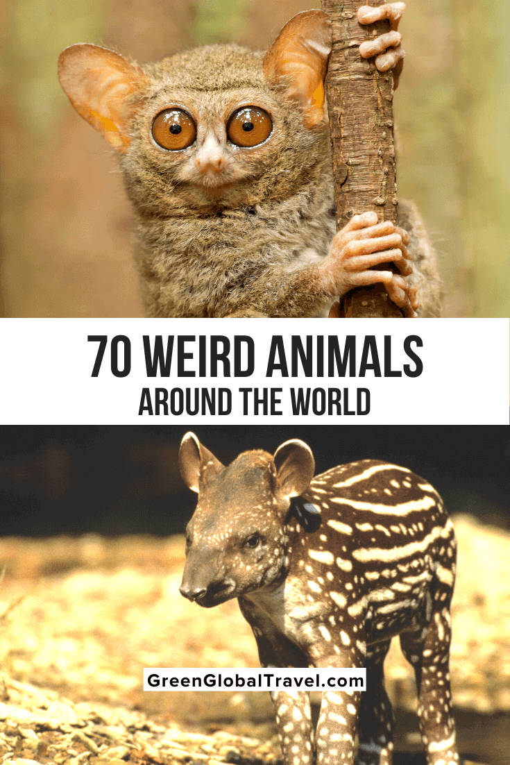70 Cool & Weird Animals from Around the World (An Epic Guide)