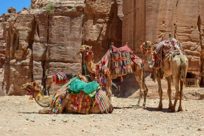 Bedouin Camels at the Petra Treasury in Jordan