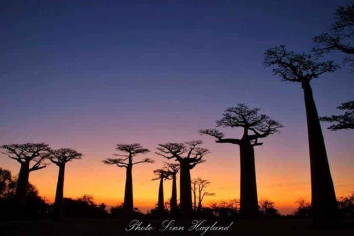 Baobab Alley in west Madagascar