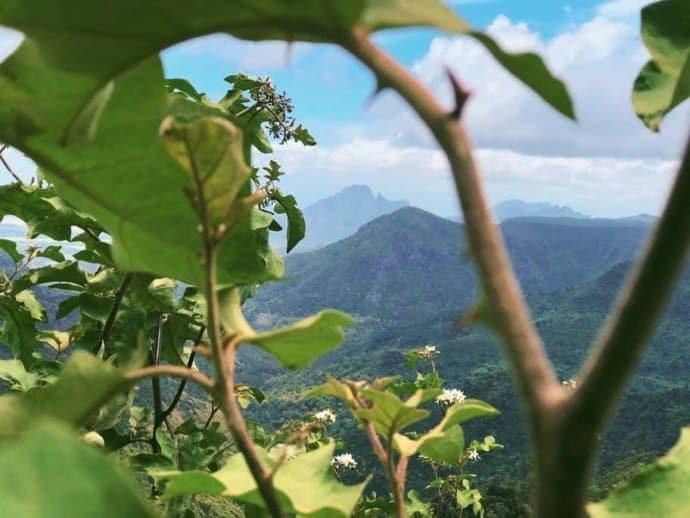 Stunning mountain scenery on the African island of Mauritius