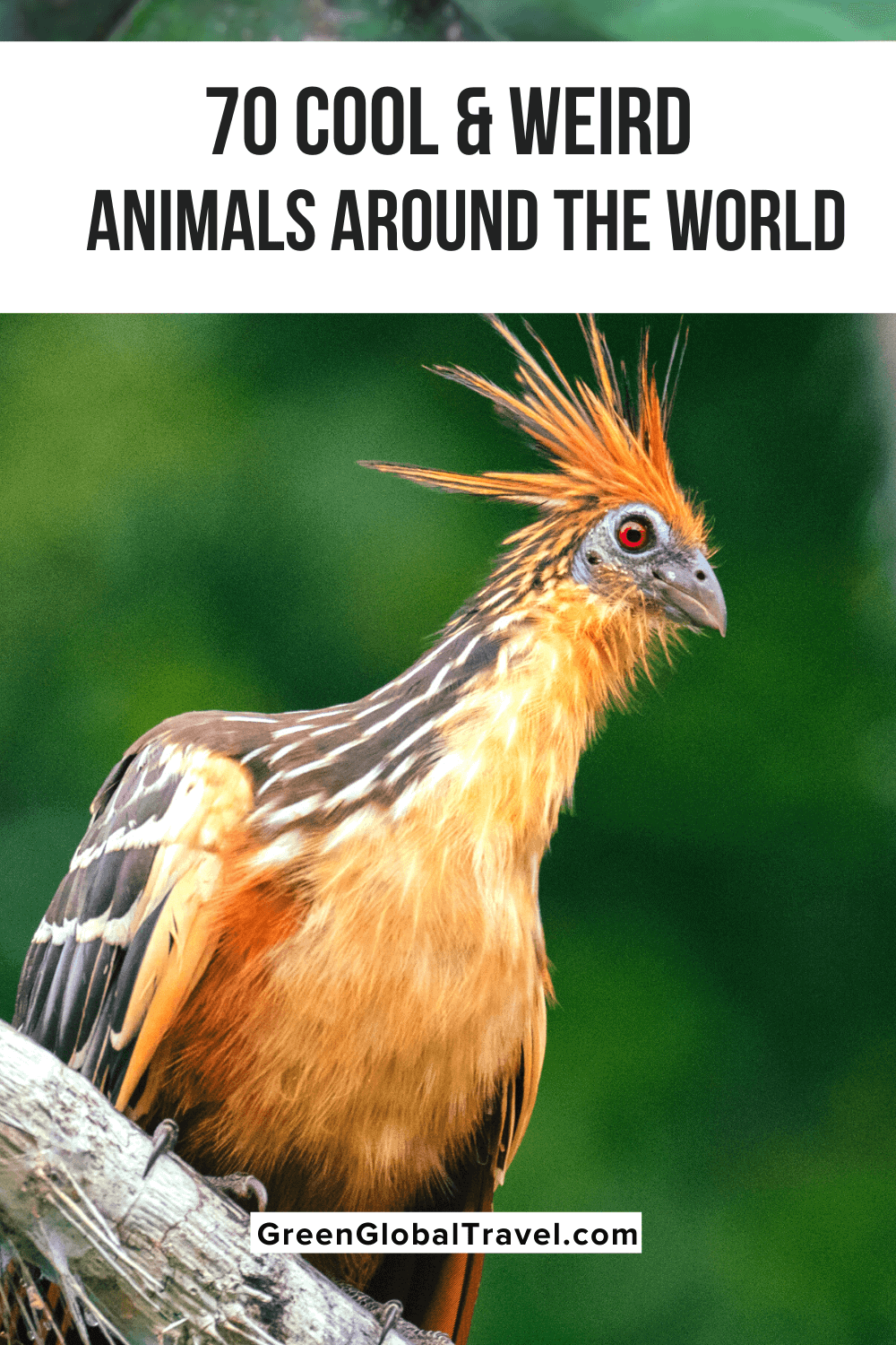 Love animals? Check out our epic guide to 70 Cool & Weird Animals Around the World with strange animals from the Sea, weird birds, unusual insects, unique amphibians & reptiles, cool mammals and weird-looking nocturnal animals | weird animals | cool animals | strange animals | unique animals | interesting animals | funny looking animals | unusual animals |weird looking animals | weird creatures | weirdest animals in the world | odd animals | real weird animals | most unusual animals