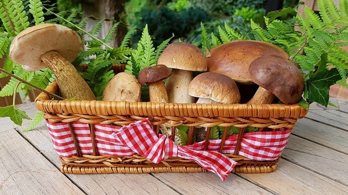 Best Mushrooms to Grow at Home
