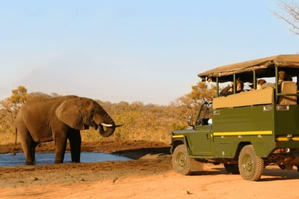 Best National Parks in Africa for Wildlife Safaris