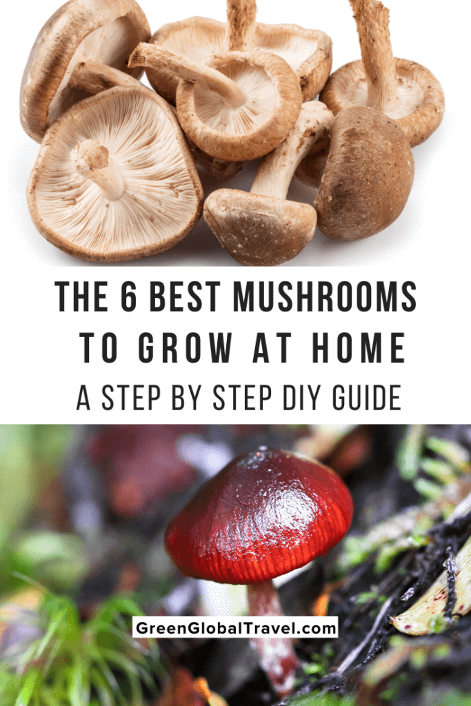 How to Grow Mushrooms at Home (A Step by Step DIY Guide) includes the 6 Best Mushrooms to Grow at Home, Ways to Grow Mushrooms at Home, Instructions for how to Grow Mushrooms At Home & more! | spawning mushrooms | how long does it take to grow mushrooms | how to grow oyster mushrooms| grow shrooms | how to grow shitake mushrooms | mushrooms to grow at home | how mushrooms grow | grow your own mushrooms | growing mushrooms in coffee grounds | growing mushrooms at home | grow at home mushrooms