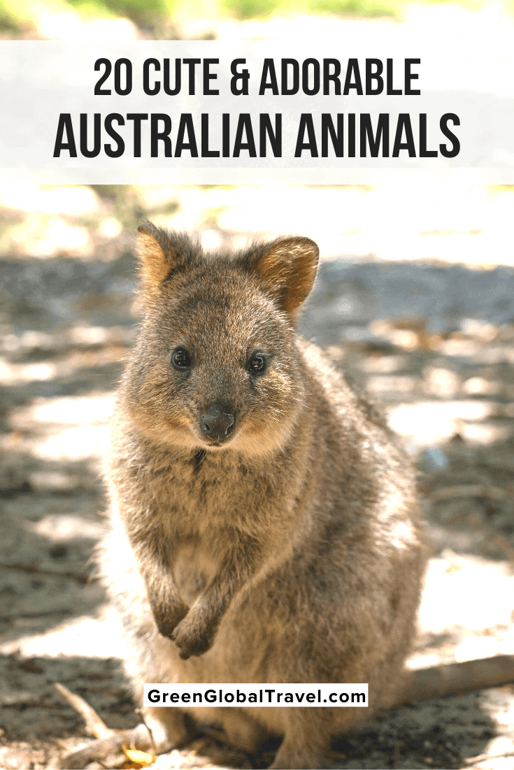 Cute Australian Animals