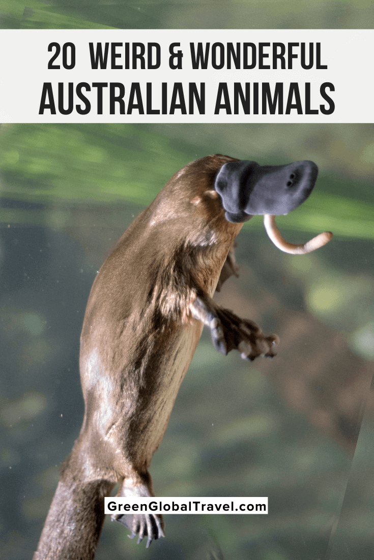 Weird Australian Animals