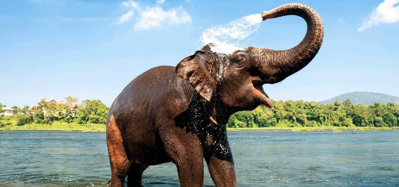 Kerala Wildlife Sanctuary Southern India