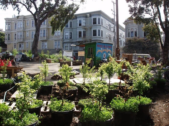 Urban Food Forest Garden