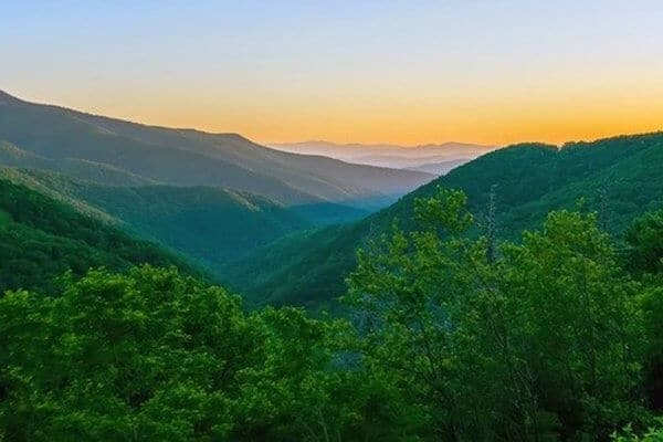 20 National Forests - Header